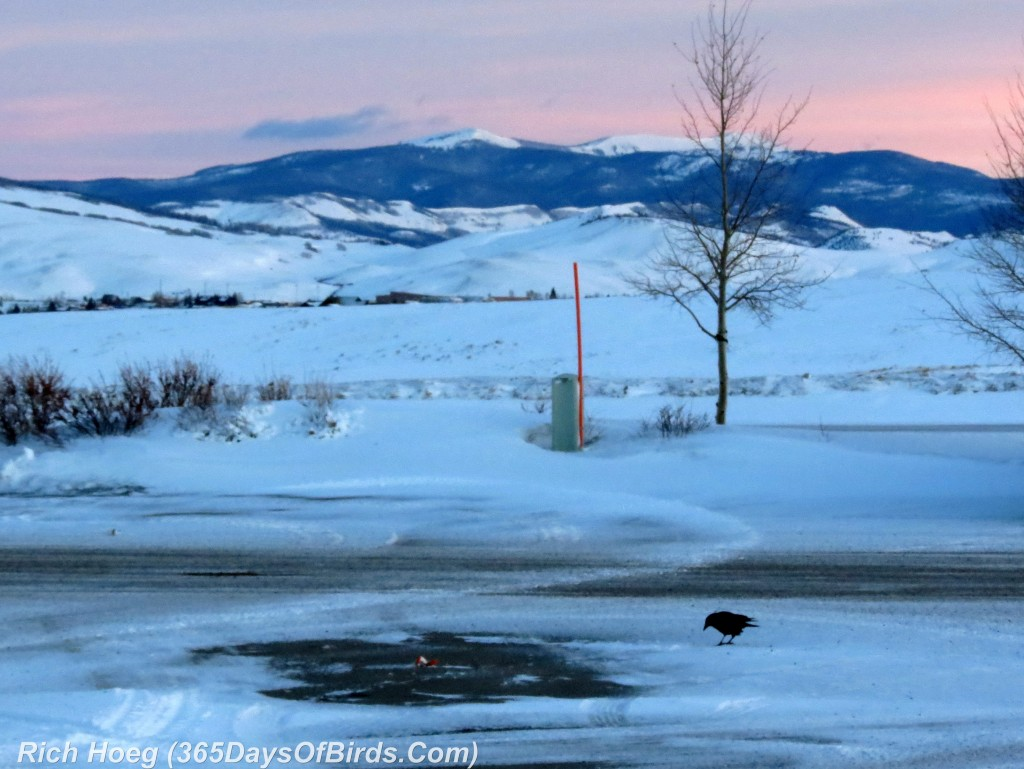 026-Birds-365-Rocky-Mountain-Sunrise-Crow