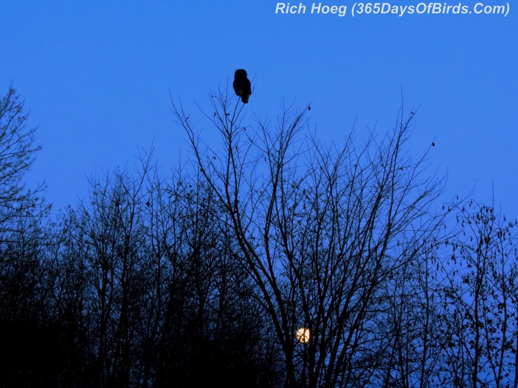 052d-Great-Grey-Owl-Moonrise