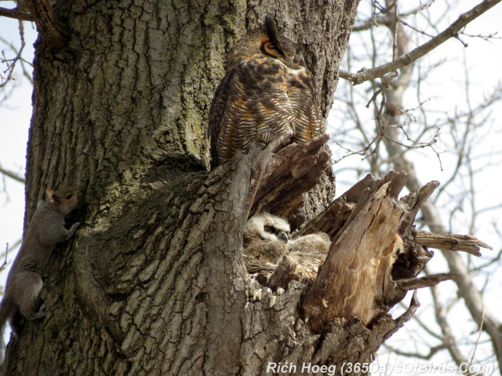060-Birds-365-Owl-Family-Squirrel