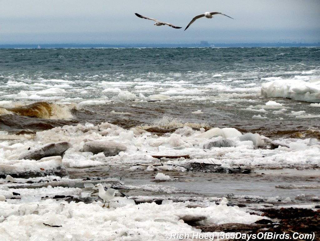 080-Birds-365-Angry-Lake-Superior
