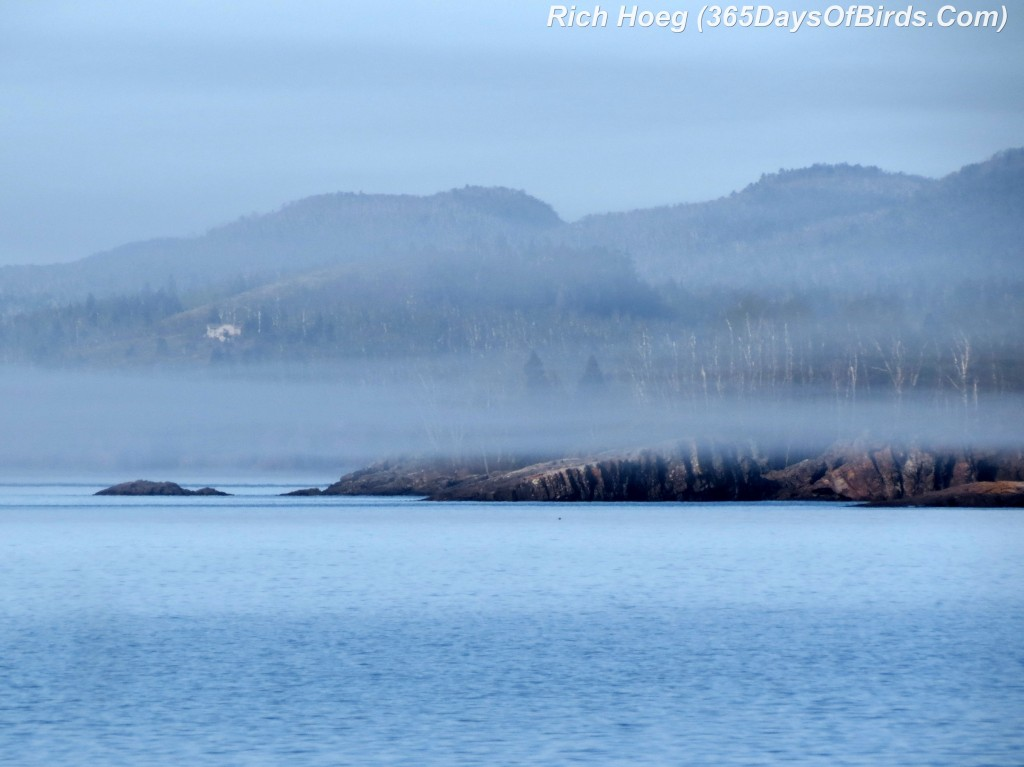 127-Birds-365-Sugarloaf-Cove-Fog