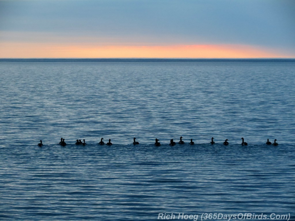 136-Birds-365-Geese-At-Sunrise
