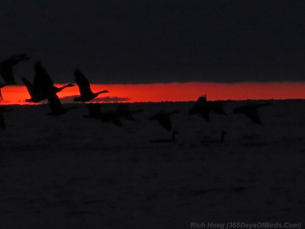 288-Birds-365-Takeoff-of-the-Dawn-Patrol-Final