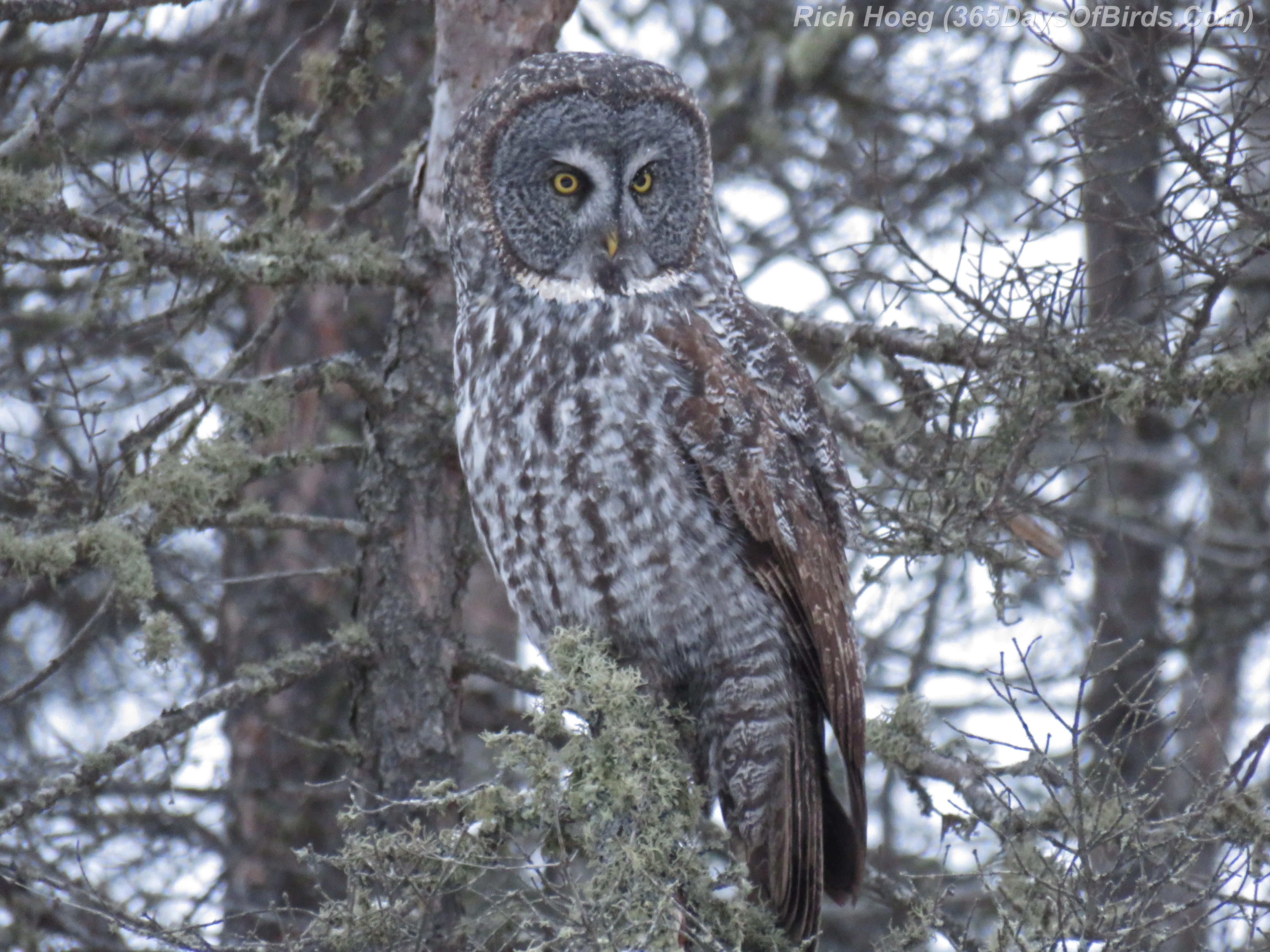 Day 329: Owls, Owls and more Owls! | 365 Days of Birds