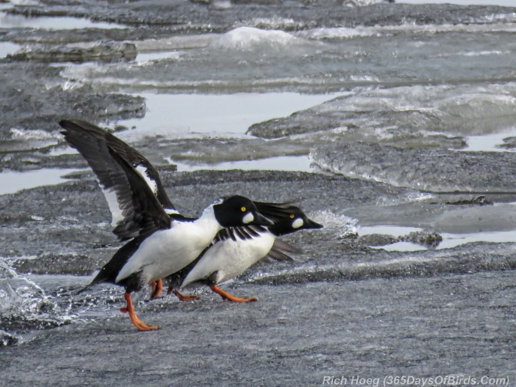 Y2-D053-Goldeneye-Frozen-Flight-3