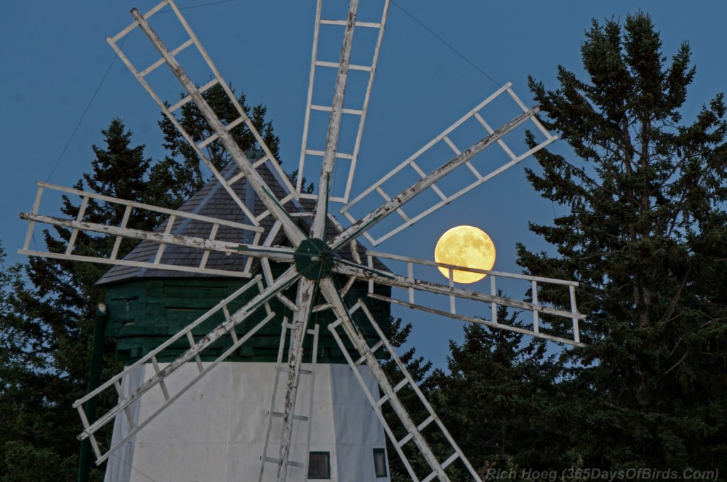 Davidson-Windmill-Blue-Moon