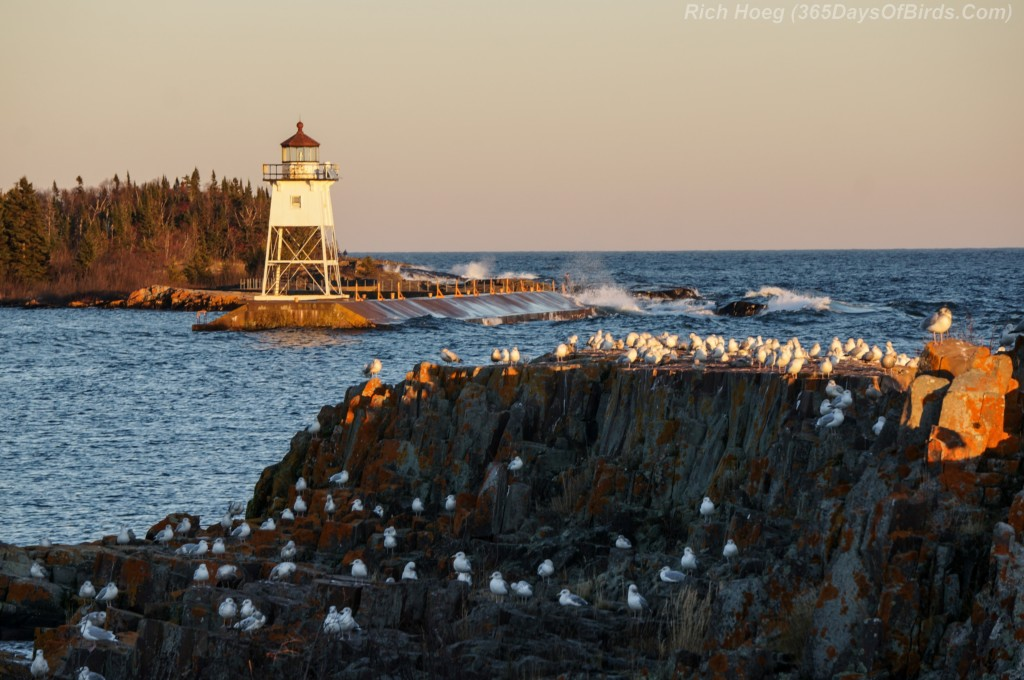 16-Bird-Seagull-Lighthouse