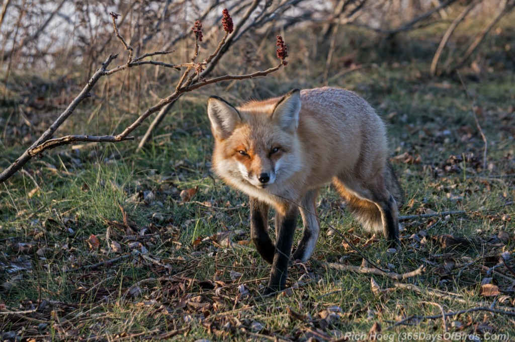 Red-Fox-Park-Point-1