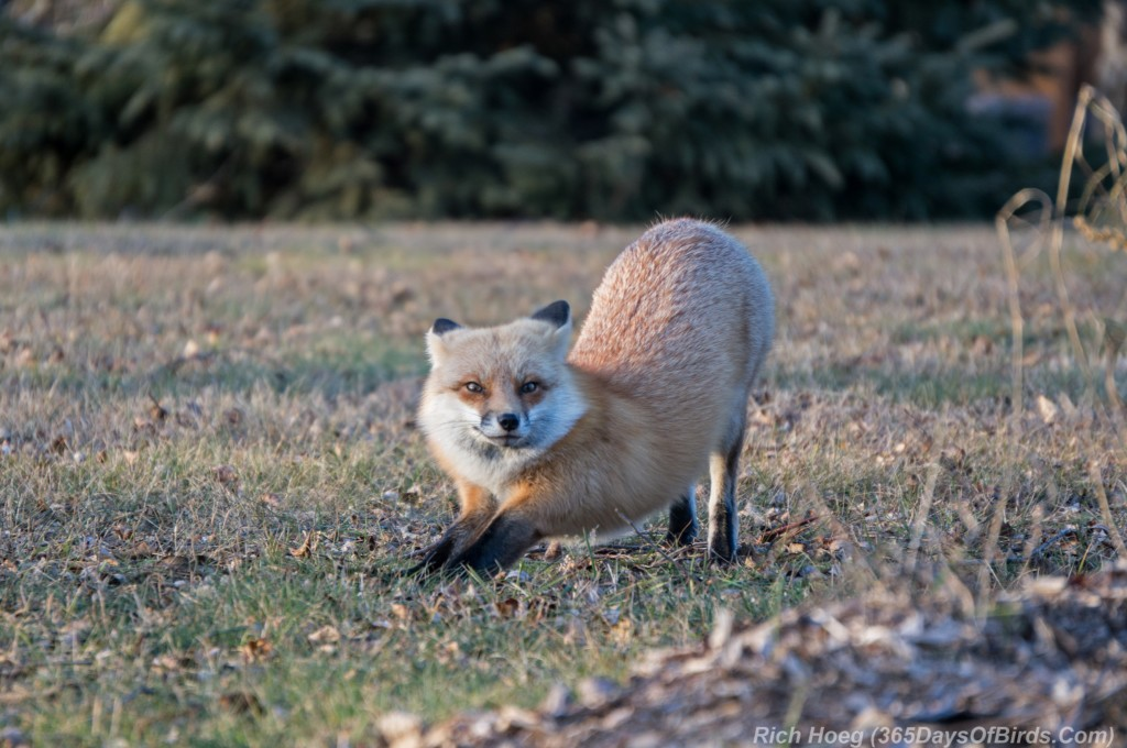 Red-Fox-Park-Point-5