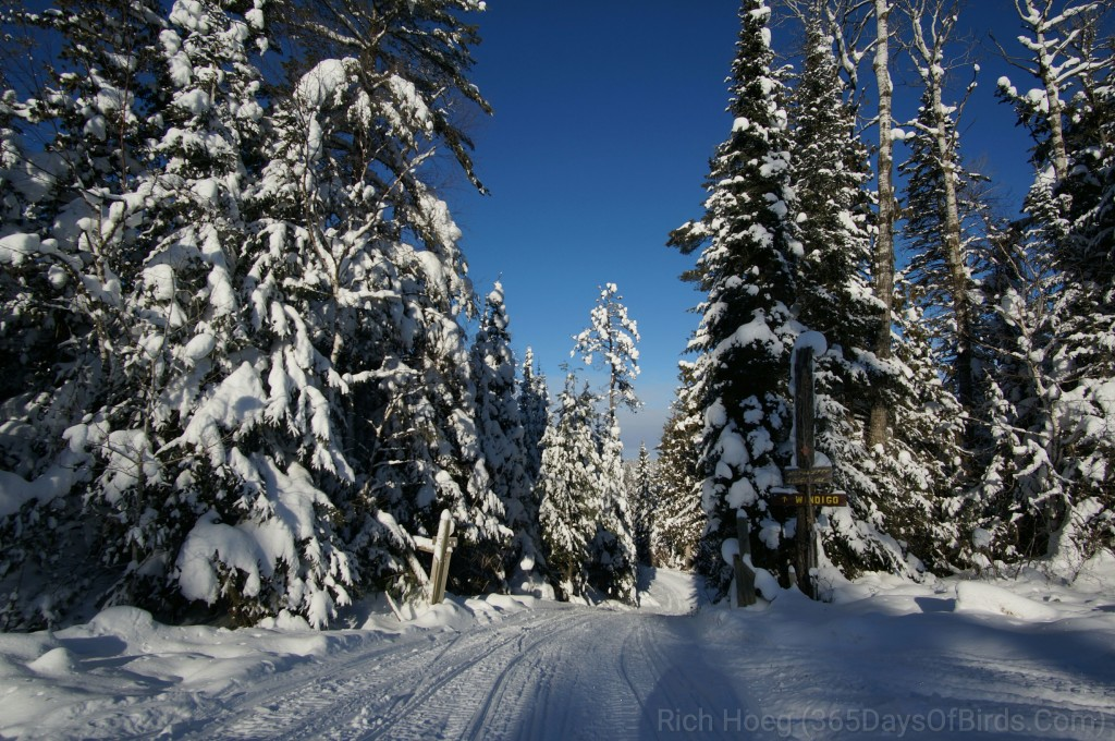 Y3-M01-Gunflint-Trail-Winter-Wonder-Trail