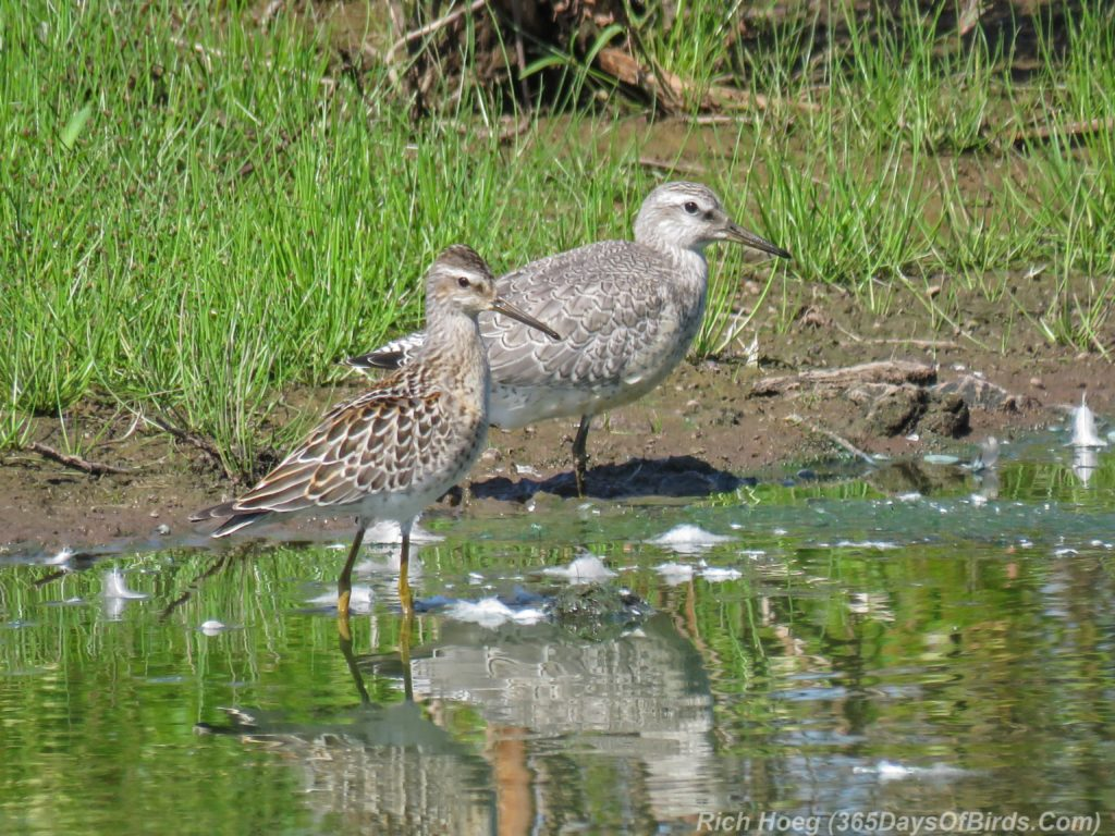Y3-M08-Erie-Pier-Sunday-Sandpiper-Pair