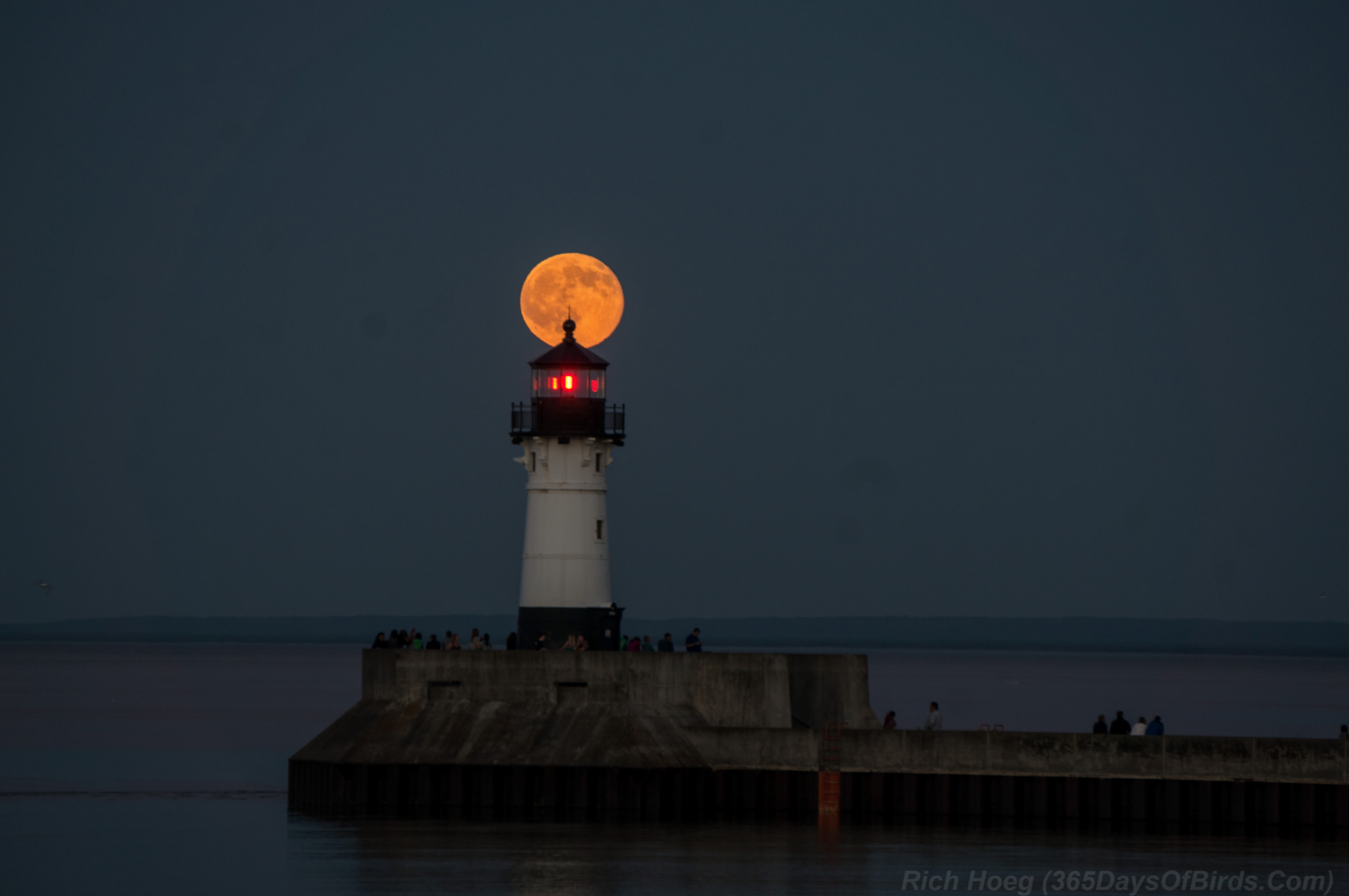 The Strawberry Moon Over Lake Superior | 365 Days of Birds