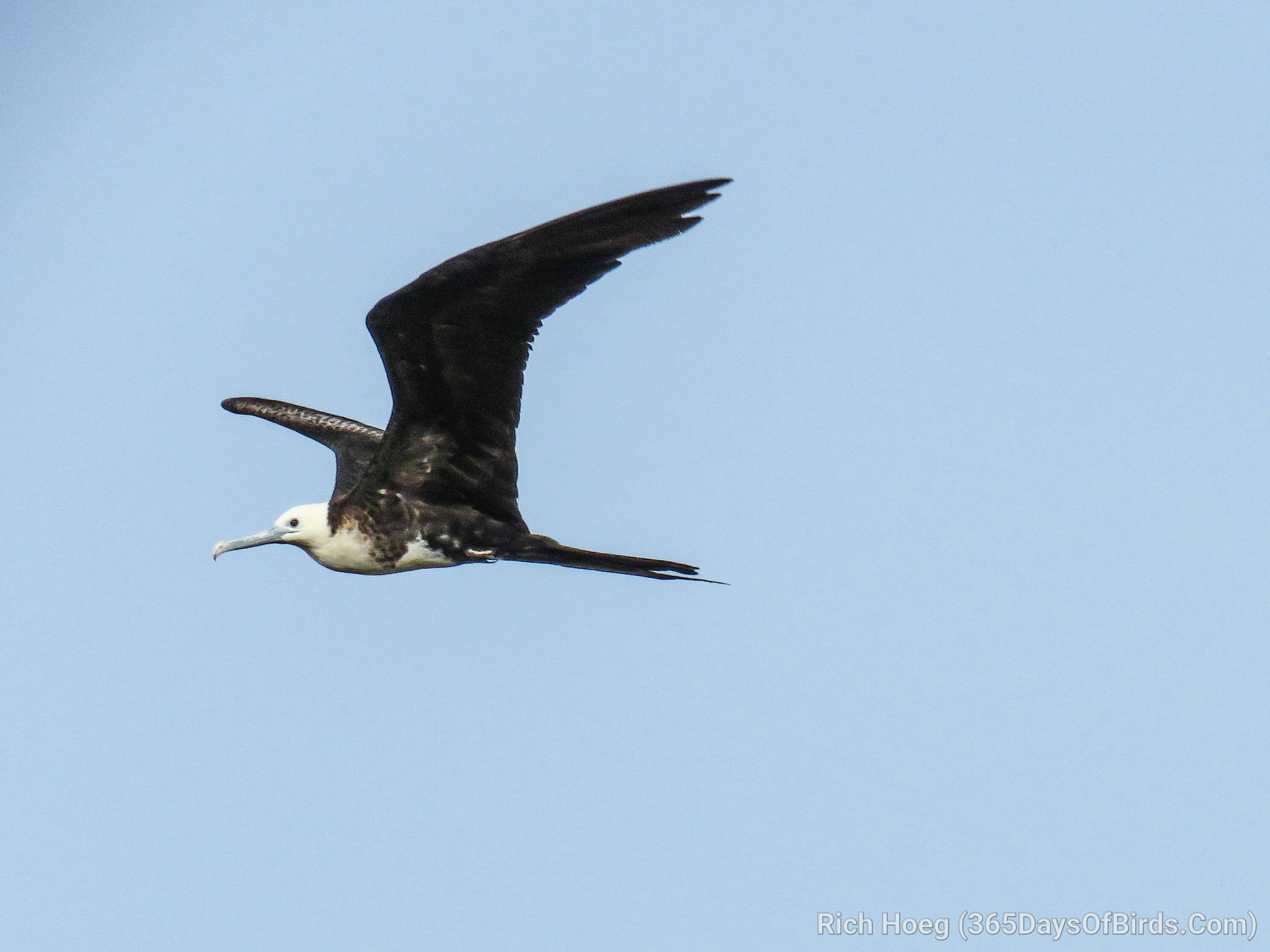 The Birds Of Las Catalinas Guanacaste Costa Rica 365