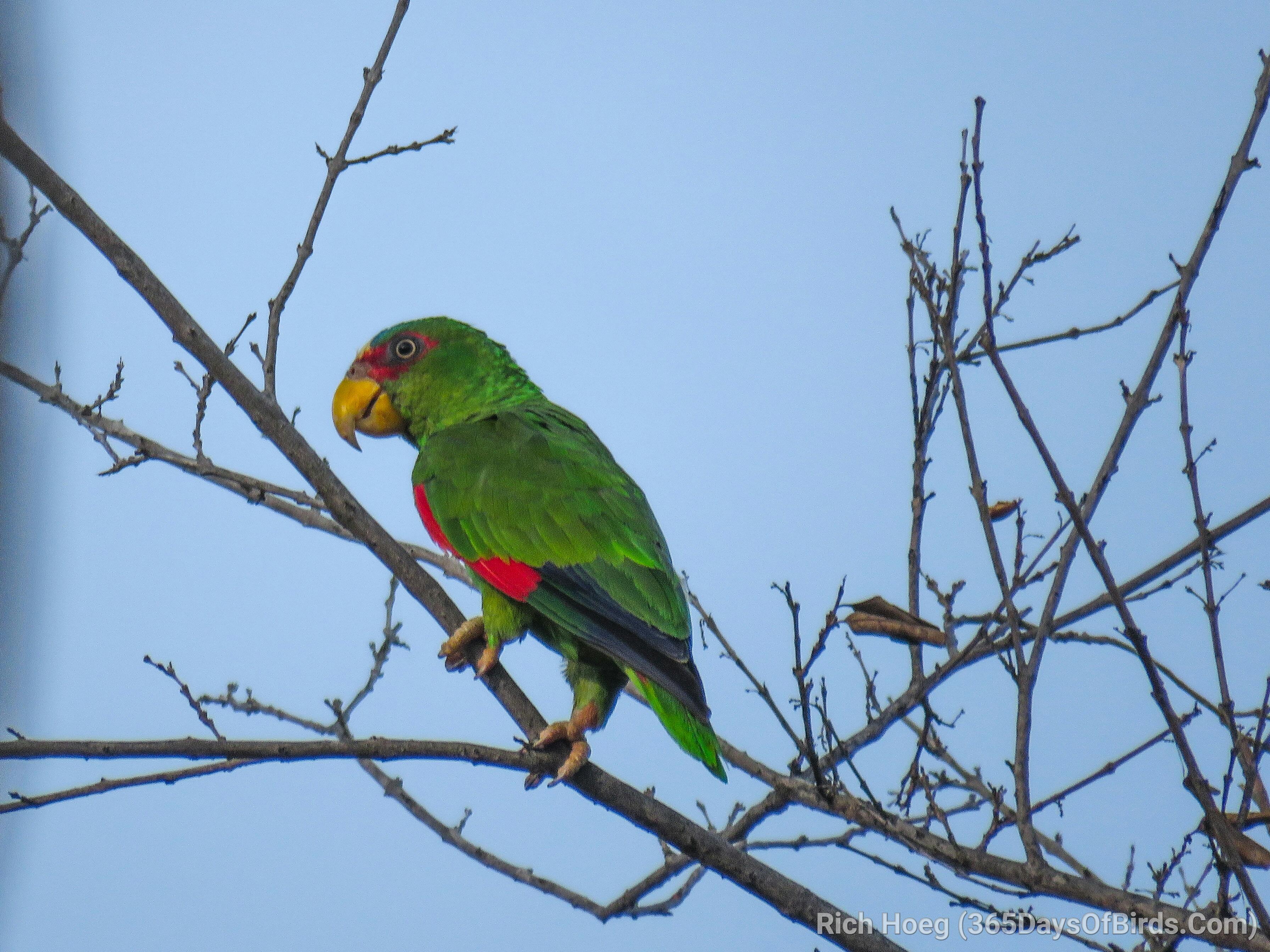 The Birds Of Las Catalinas Guanacaste Costa Rica 365 Days Of Birds