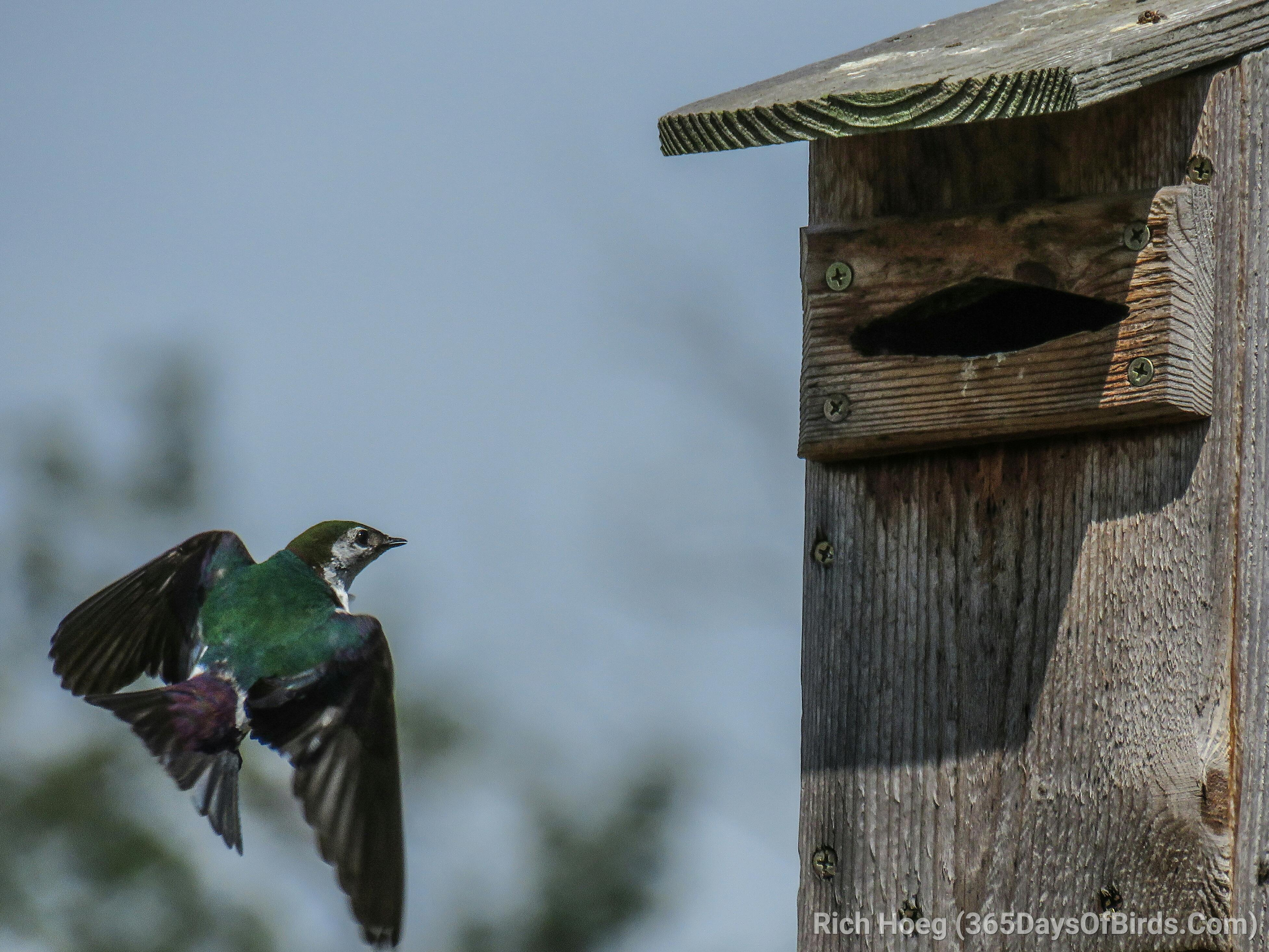 Violet Green Swallow House Plans