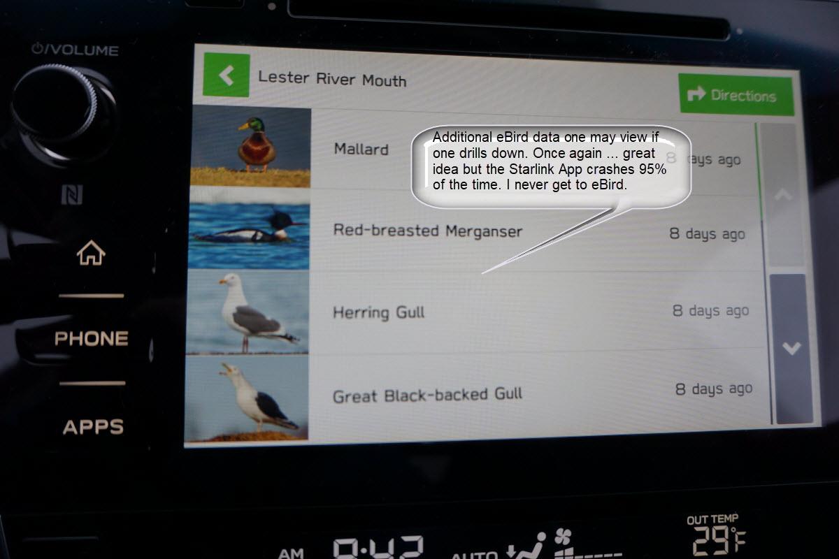 Subaru Starlink App + eBird = Bugs, not Birds | 365 Days of